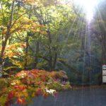 autumn_03