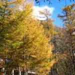 autumn_06