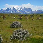 patagonia18